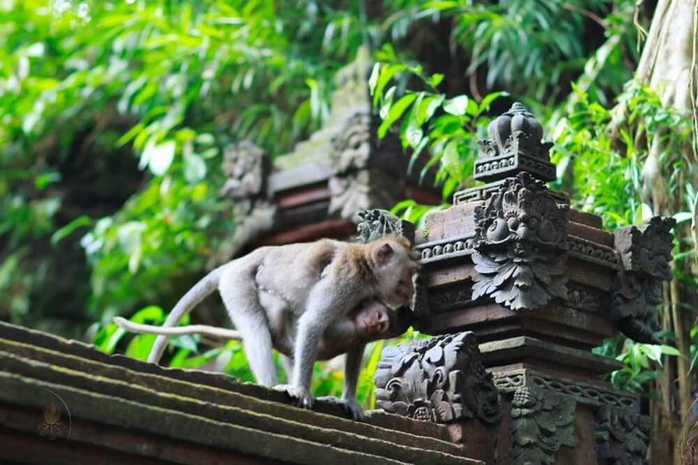 điểm vui chơi giải trí ở Bali