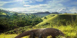 đảo rồng komodo indonesia